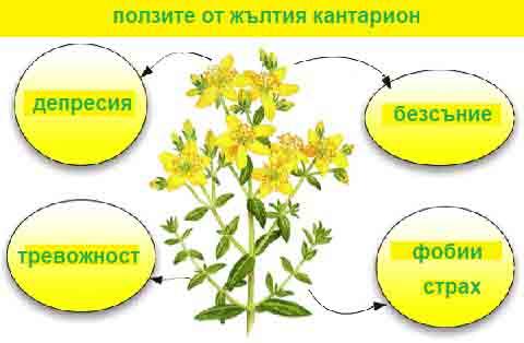 Лечение на депресия с билки
